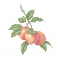 primary-Botanical-Drawing-Workshop-with-Catherine-Watters-1478282925