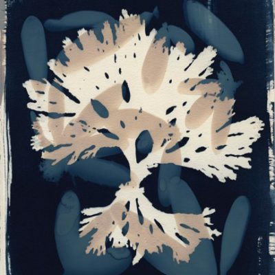 Cyanotype Printing with Josie Iselin