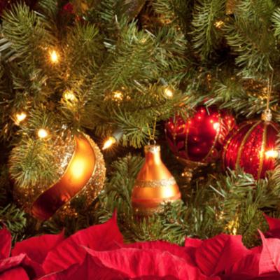 Novato Christmas Festival and Tree Lighting