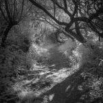 Marty Knapp - One Place Deeply: Walking the Green Bridge Trail