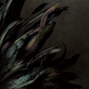 Studio Lighting: Flowers & Found Objects