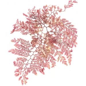 Waterhouse Seaweed