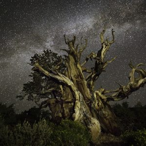 Beth Moon: Diamond Nights, California