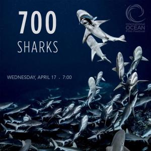 International Ocean Film Festival presents 700 Sharks