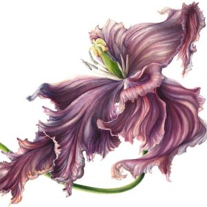 American Society of Botanical Artists – 22nd Ann...