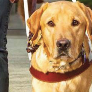 Robert Falla – The History of Guide Dogs for the Blind