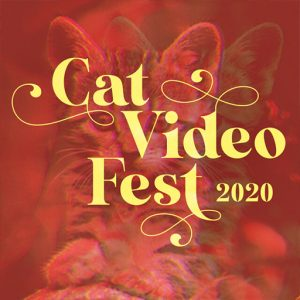 Cat Video Fest!