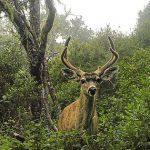 **CLOSED** Casual in Nature: Motion-Sensor Wildlife Portraits