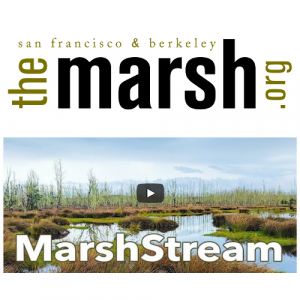 MarshStream