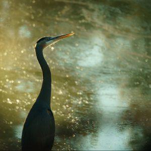 LOCAL>> Wonderfully Wild Marin: Calling all ...