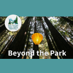 Mill Valley Fall Arts Festival: Beyond the Park