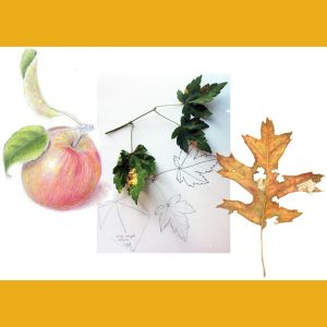 LOCAL>> Botanical Art Workshops