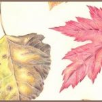 LOCAL>> Drawing the Colors of Winter – Art Workshop