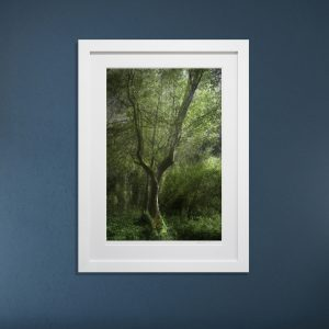 """""""Concerning Trees"""" Photography Exhibit"""