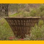 Behind the Scenes at the Basketry Garden